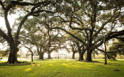 10 Things To Do in Natchitoches, LA
